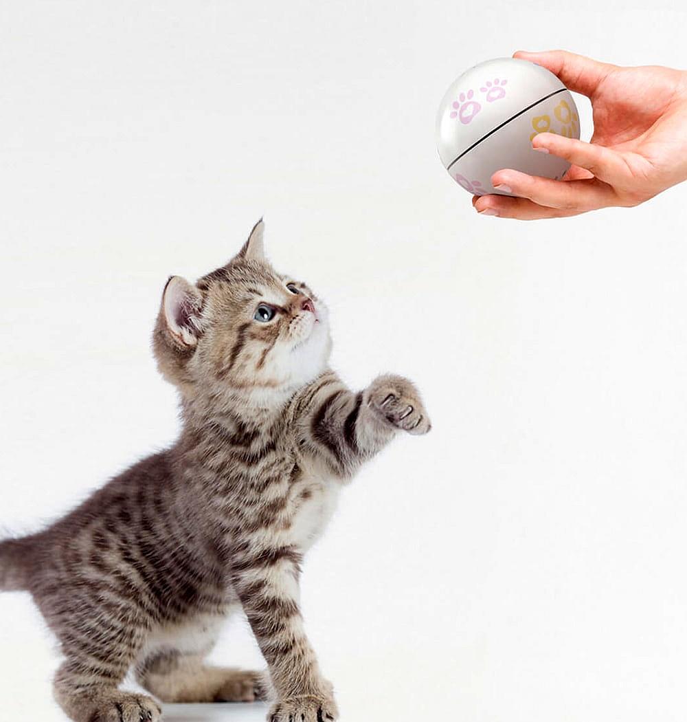 Interaktywna piłka dla kota